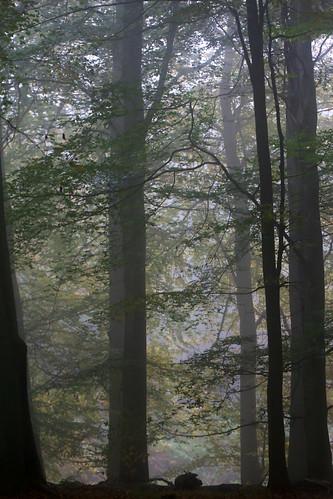 A walk in King's Wood