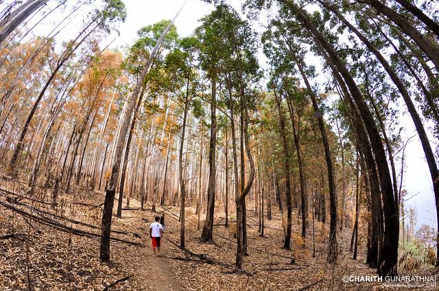 The art of Trees - Ella Rock - Sri Lanka