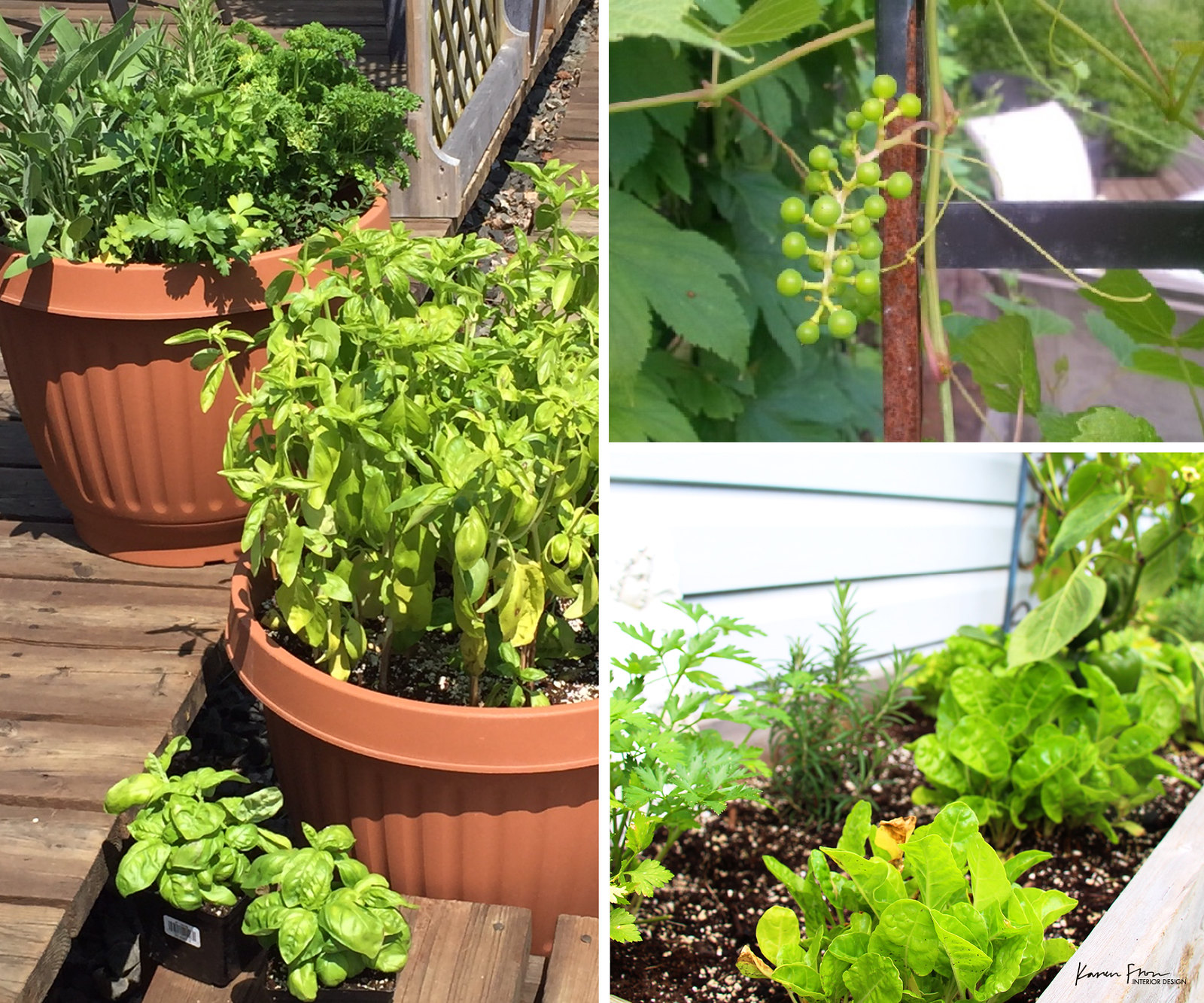 outdoor planters filled with herbs and lettuce