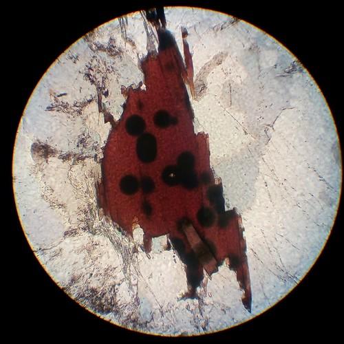 Zircon in biotite (30 µm thin section, PPL)