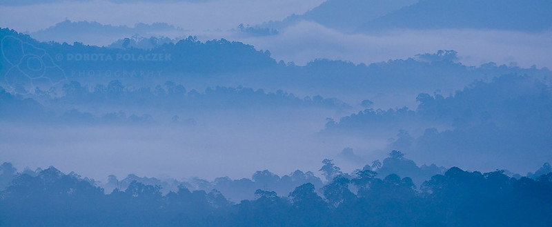 5,30 am - dawn in the rainforest