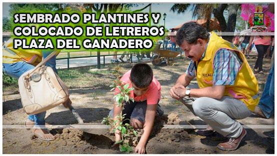 sembrado-plantines-y-colocado-de-letreros-plaza-del-ganadero