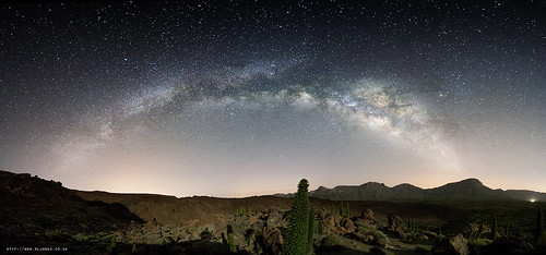 If I was an alien, visiting Earth, I'd disguise myself as a cactus too. | by c@rljones