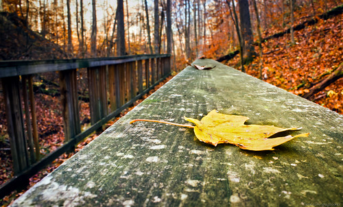 Leaf on a Bridge | by Greg Booher