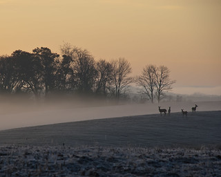 Deer in the Fog Light | by Rh+