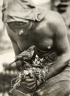 Vogelnest op grafbeeld / Blackbird's nest in the folded hands of a statue | by Nationaal Archief