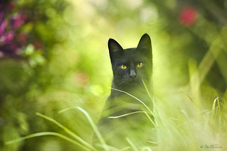 Black Cat | by Ben Heine
