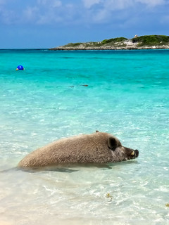 Beach Pig | by topendsteve