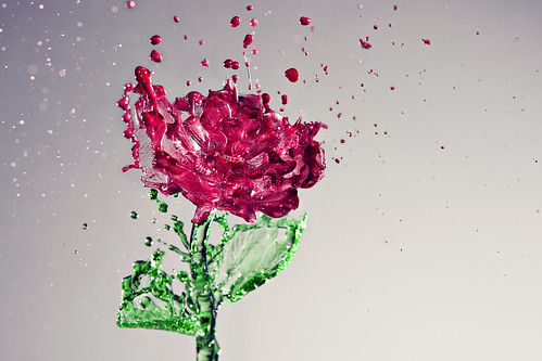 317/365 A Splash of Rose [Explore] | by Cloud Age Photo