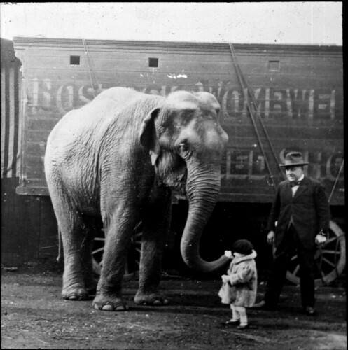 Elephant meets little girl | by Tyne & Wear Archives & Museums
