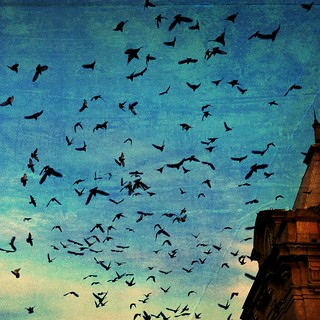 Birds and us, Porto | by basse def