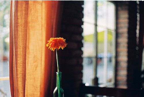 Flower @ Let It Be cafe | by Khánh Hmoong