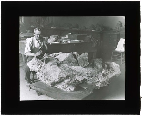 Man uncovering fossil, 1900-1935. | by Smithsonian Institution