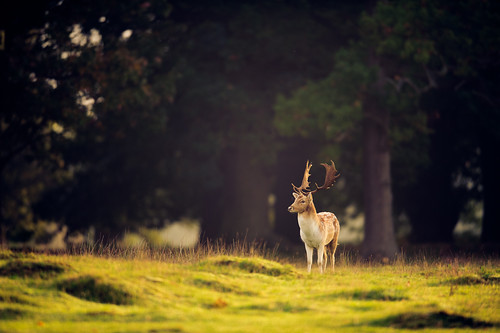 prince of the forest | by andrew evans.