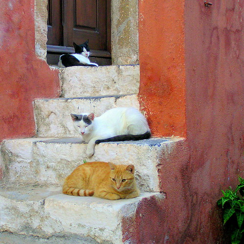Monemvasia (single gate), three cats siesta on the steps, shhhhh....... | by oriana.italy