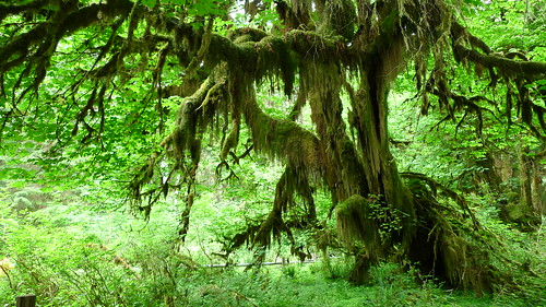 Olympic National Park - Hall of Mosses | by j.o.h.n. walker