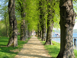 Alley with lime trees (Tilia) | by Batikart