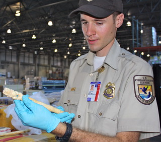 Inspector looks at an imported statue | by U. S. Fish and Wildlife Service - Northeast Region