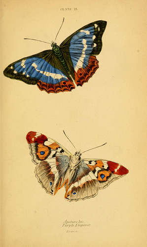 n296_w1150 | by BioDivLibrary