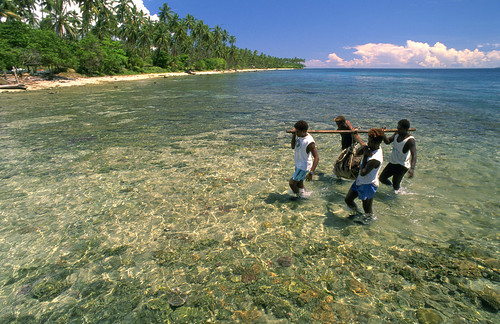 Carrying Tridacna Gigas broodstock from the sea, Solomon Islands. Photo by Mike McCoy, 2001