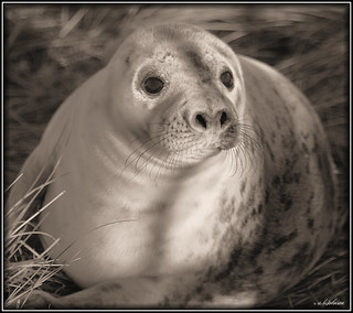 DONNA NOOK 616 SEPIA | by car 67