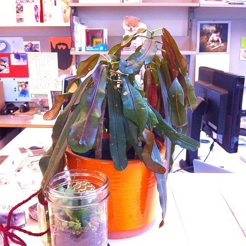 Post-holiday plant before watering @chroniclebooks | by hizknits