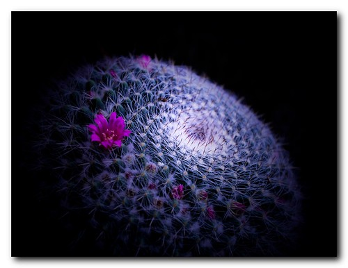 Cactus world | by Evo55