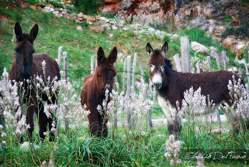 Donkeys family is still looking at me - Explore #236 | by claudiodelfuoco