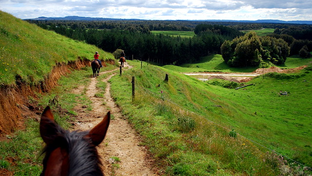 Horseback near Tauranga (Oropi Bushlands)