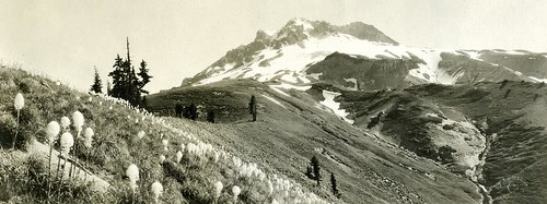 Mt. Hood from Paradise Park | by OSU Special Collections & Archives : Commons