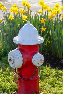 fire hydrant and daffodils | by manywinters