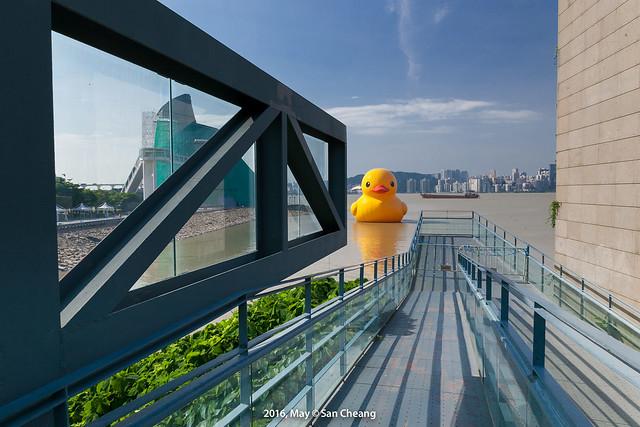 黃色小鴨來澳門