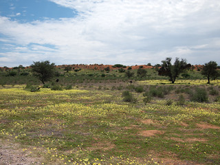 Kalahari Landscape after the Rain | by jaffles