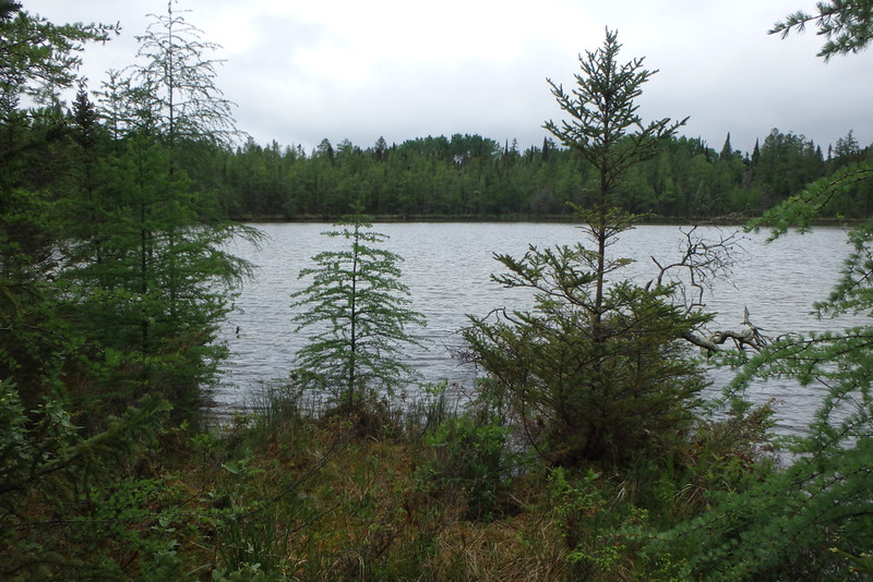 a lake obscured with a few pine trees, with many more on the opposite side