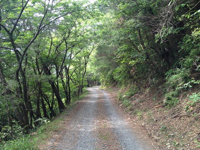 岐阜のマチュピチュ 天空の遊歩道 林道
