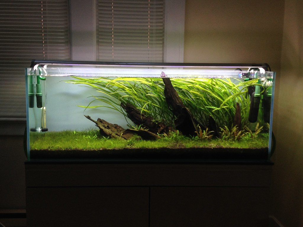 65 gallon se asian nine page 2 the planted tank forum for 65 gallon fish tank