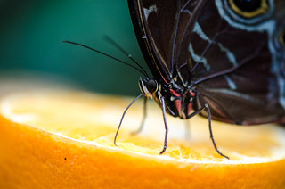 Zoo Rotterdam Butterfly | by hebiflux