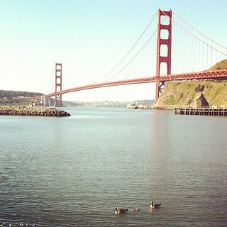 Goslings!! #ggb75 | by Bay Area Discovery Museum