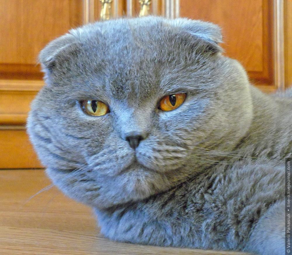 20160702_lutsk_cat_001