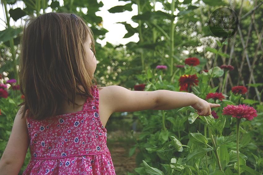 Qué tendrá el rosa!!!! eligiendo flores de Zinnia en nuestro huerto-jardín!
