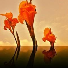 Flowers gloomy in my heart. #