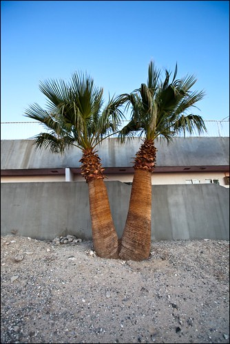 Palms | by Kenneth David Geiger (aka Ken Foto)