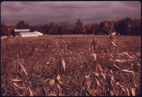 Corn and Pumpkins on Farmland Near the Cuyahoga River...09/1975. | by The U.S. National Archives