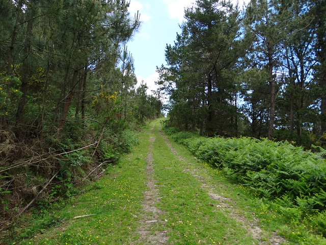 Camino en la Ruta dos Montes Enxa e Dordo