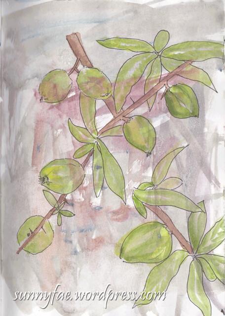 japonica-quince-fruit-sketch