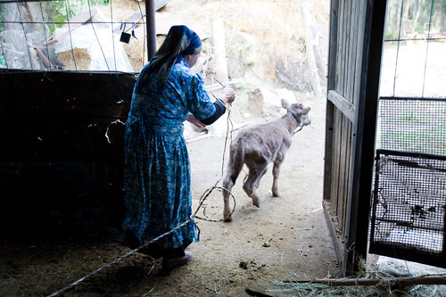 Galima Milks Her Cows Each Morning | by UN Women Gallery