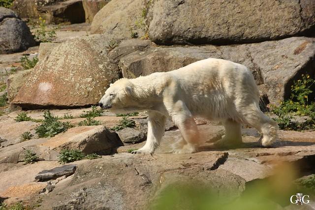 Besuch Zoo Berlin 22.05.166
