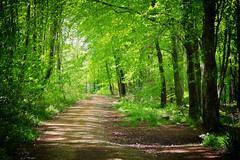 Minwear Woods, Pembrokeshire