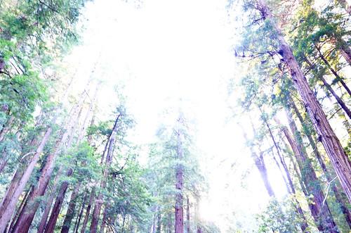 Tree Fade