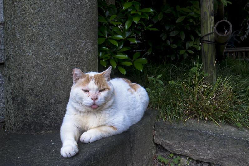 お猫様-20160608-5